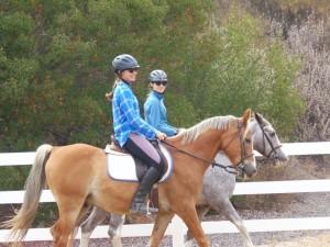 equestrian8
